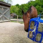 EZ Feeder Fence Installation
